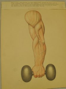 Bodybuilder David P. Willoughby's Arm Art Drawing, including an arm and a dumbbell, from the David P. Willoughby Collection.